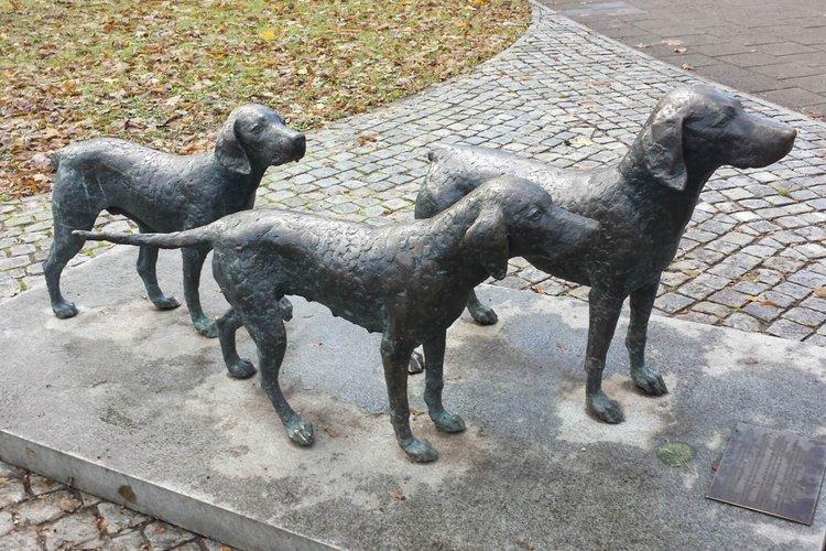 Lithuanian Hounds